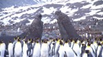 Emperor Penguins Peng-yi and Som-yi's picture