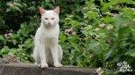 I Am a Cat's picture