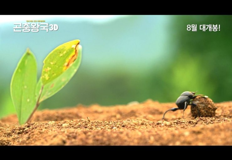Insect Kingdom 3D