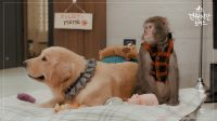 Monkey and Dog Romance